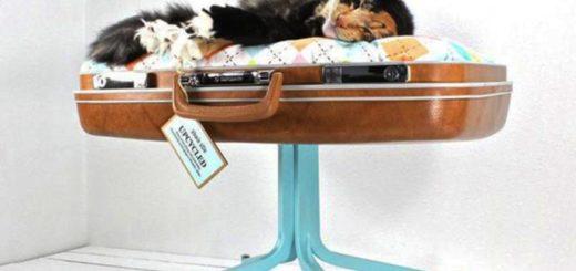 Спальня для кота из старого чемодана
