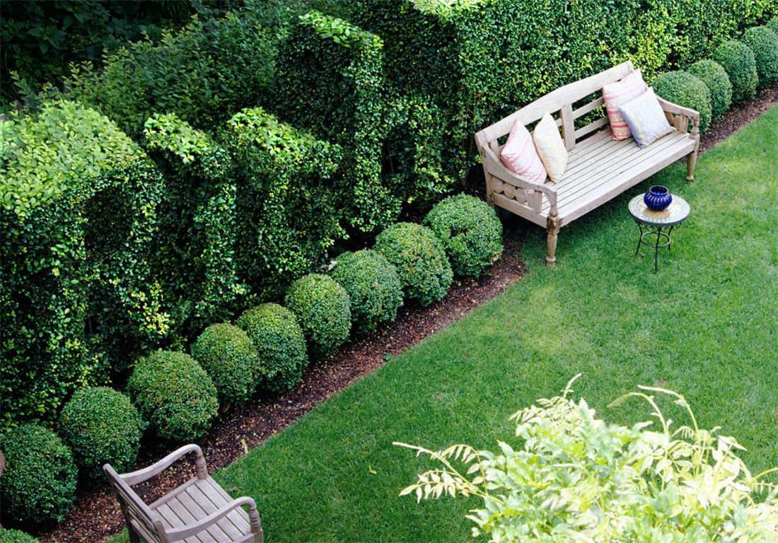 Изгородь из растений для дачи
