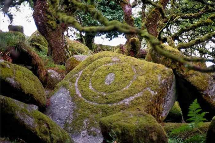 Мистический лес из Властелина колец