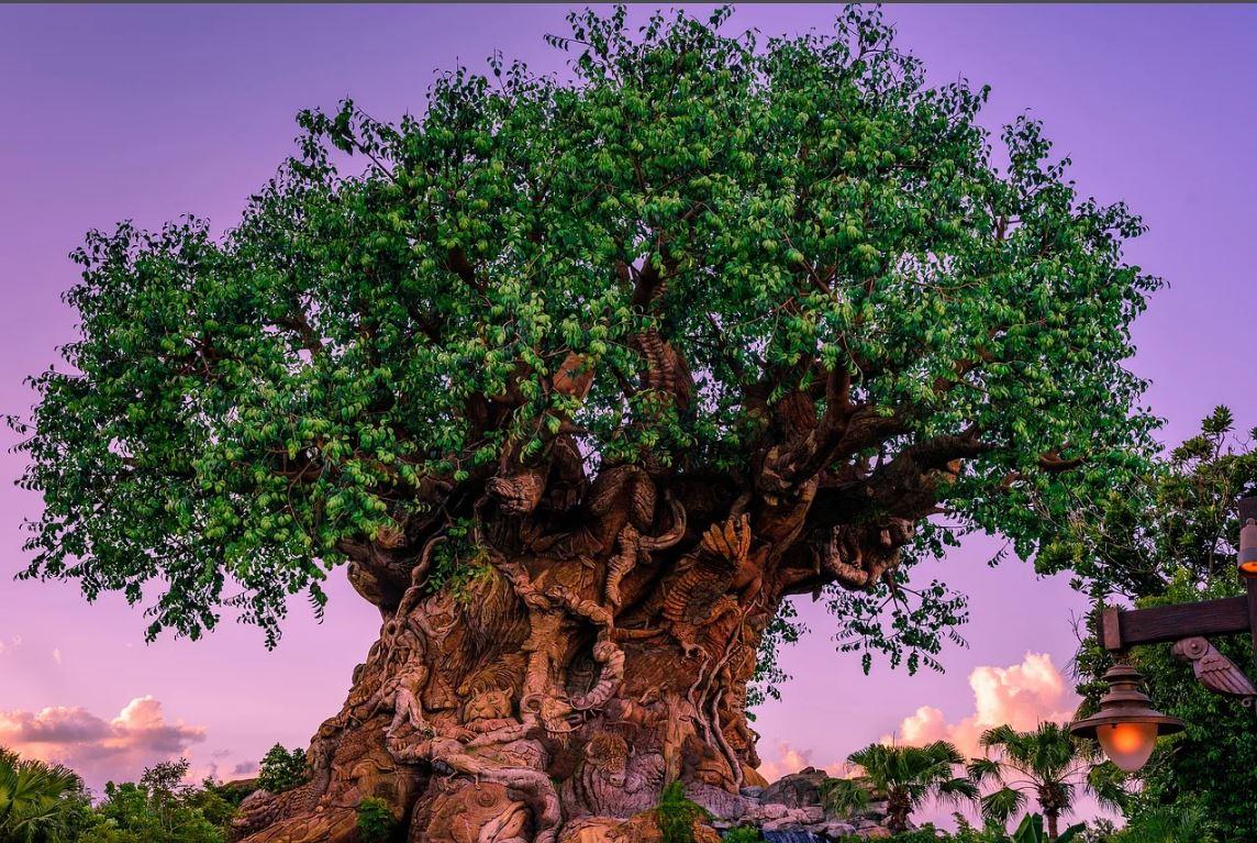 абаш африканское дерево